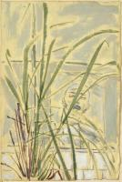 Lemon Grass II
